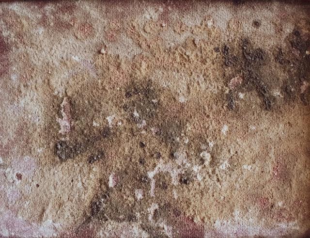 Mold Removal Pleasanton CA